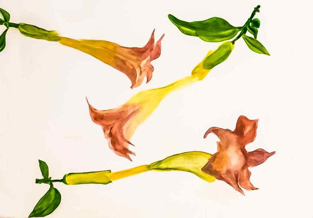 Trumpet Vine 22 x 15 inches